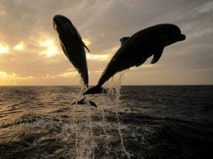 Друзья дельфины.