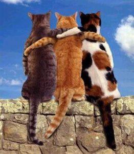 Умение выбирать друзей.