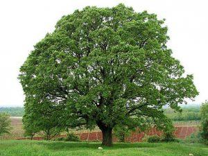 Свойства деревьев.