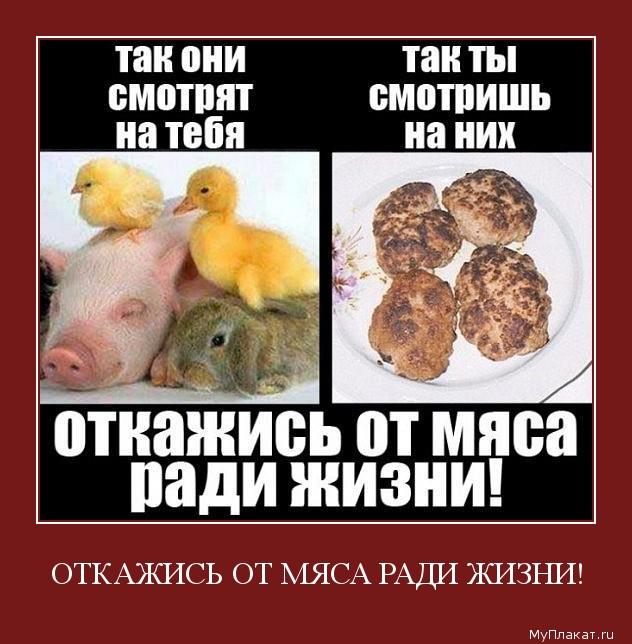Мясо и блоки.