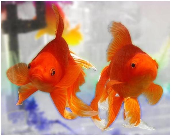 Жила - была Рыбка